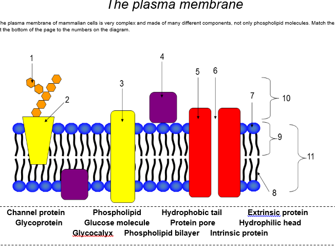 AQA A Level Biology: Membranes