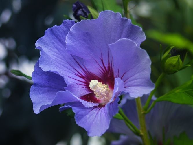 Purple Hibiscus SOW and resources with answers Part 1