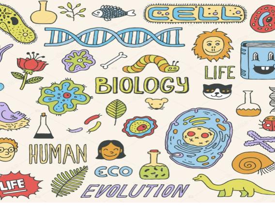 Biology revision notes  AQA GCSE 9-1