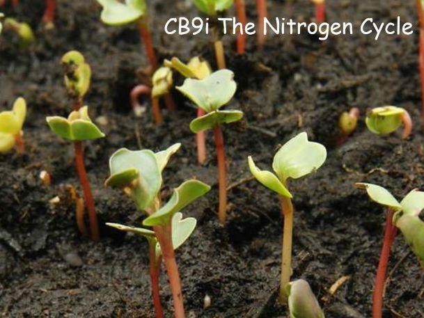 CB9i The Nitrogen Cycle lesson (EDEXCEL GCSE)