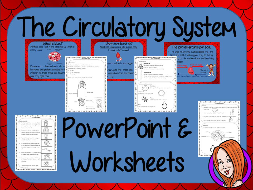Blood and the Circulatory System  -  PowerPoint and Worksheets STEAM Lesson