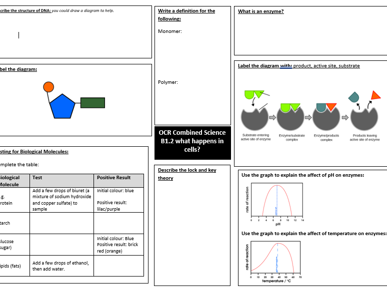 OCR Combined Science Biology B1.2 what happens in cells? revision mat