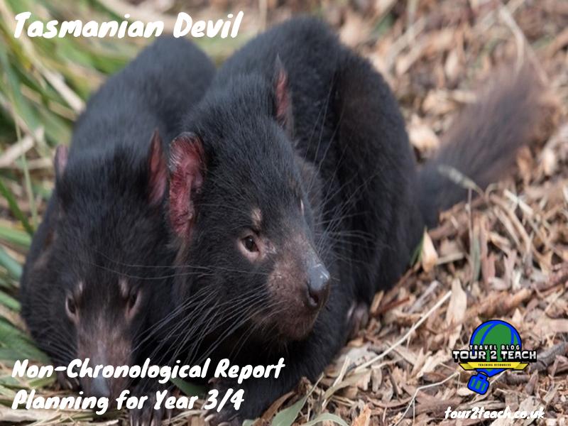 Tasmanian Devil: Non-Chronological Report Planning for Year 3/4