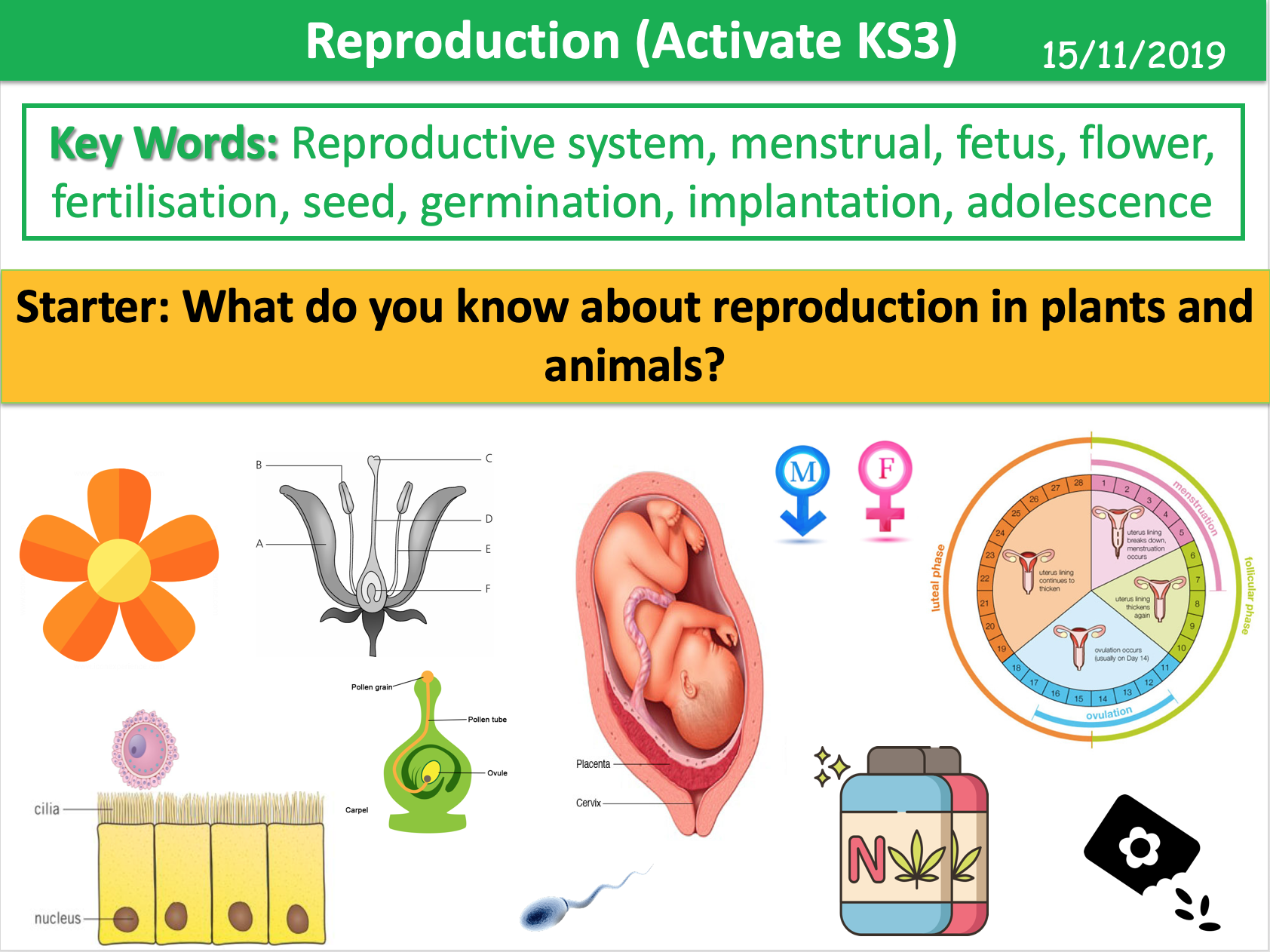 Reproduction (Activate KS3)
