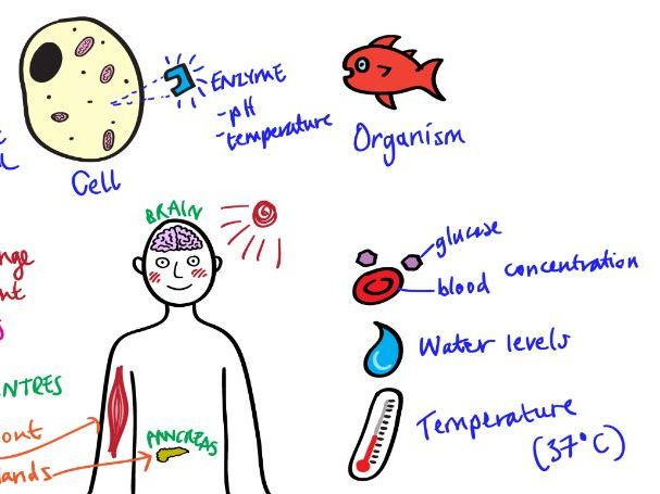 HOMEOSTASIS Revision Video GCSE 9-1 Bio & Combined Science - AQA