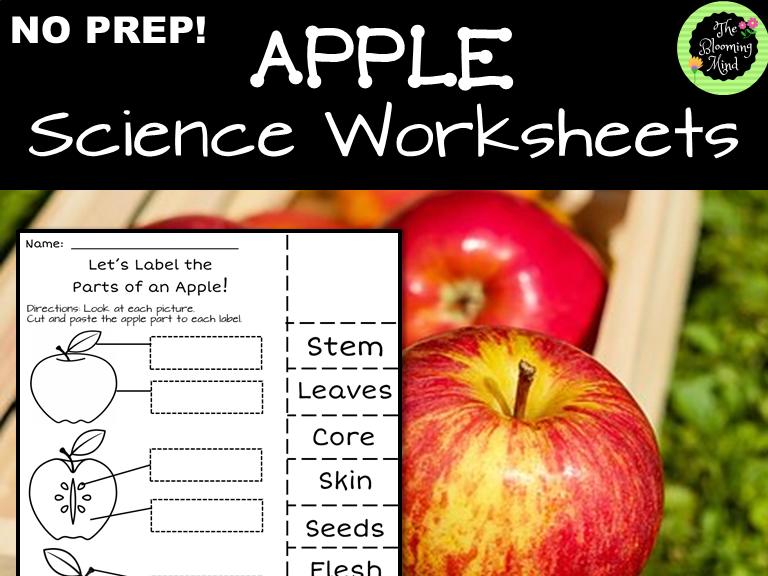 Apple Science Worksheets
