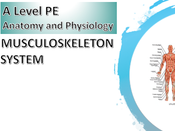 AQA A Level PE Anatomy and Physiology (Muscular Skeletal System) Powerpoint