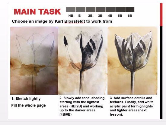 Karl Blossfeldt Tonal Pencil - KS3 Years 7-8 Art and Design Natural Forms 1 Outstanding OFSTED