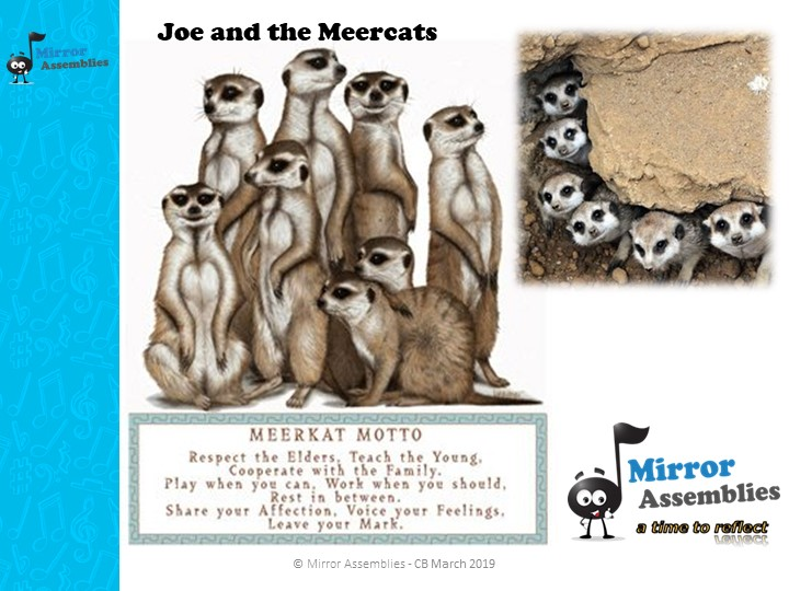 Joe and the Meercats - Knowing Right from Wrong