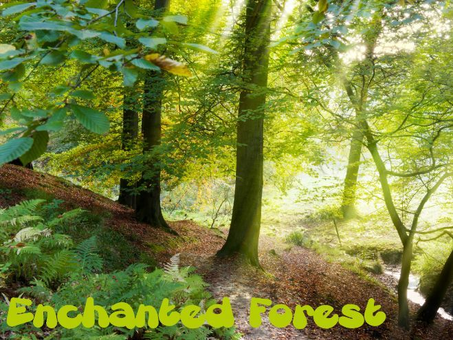 Enchanted Forest Mindfulness