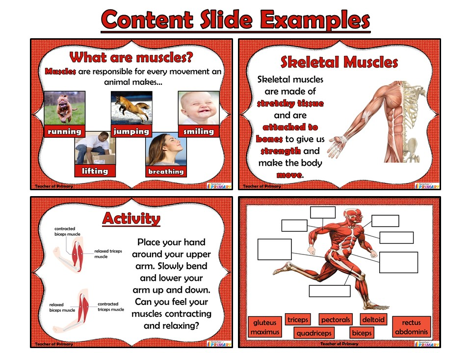 Muscles - PowerPoint presentation and worksheets