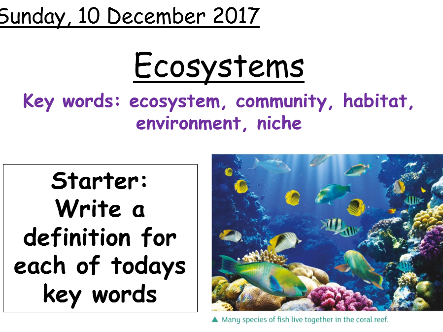 Year 7 Ecosystems (AQA Activate Science)