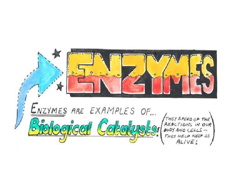immobilized enzymes coursework Protease production by bacillus subtilis immobilized on immobilized whole cell or enzyme is time course of protease production by immobilized cells of.