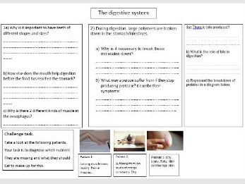 Diet and digestion revision mat