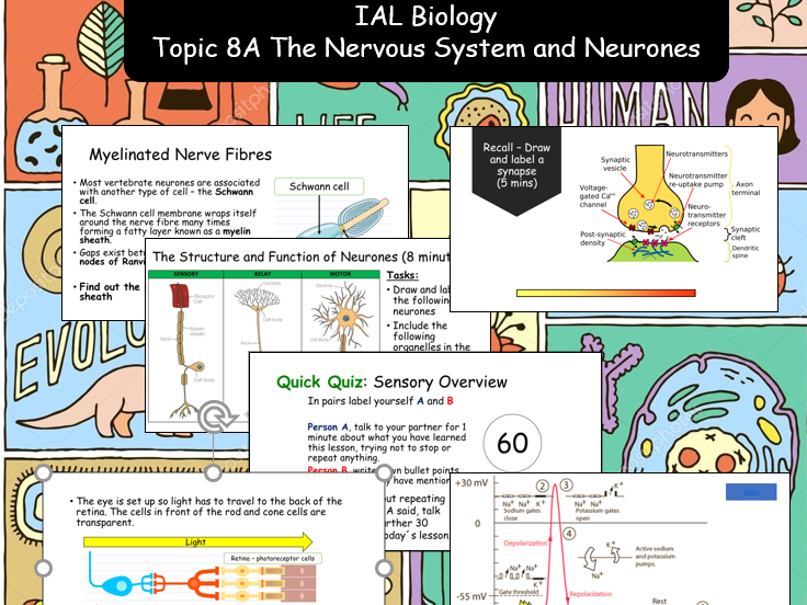 The Nervous System and Neurones Bundle