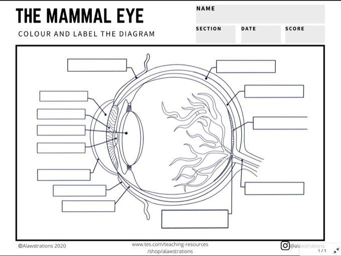 L2 BTEC Animal Care: Label the Mammal Eye Diagram