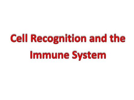 Cell Recognition and the Immune System