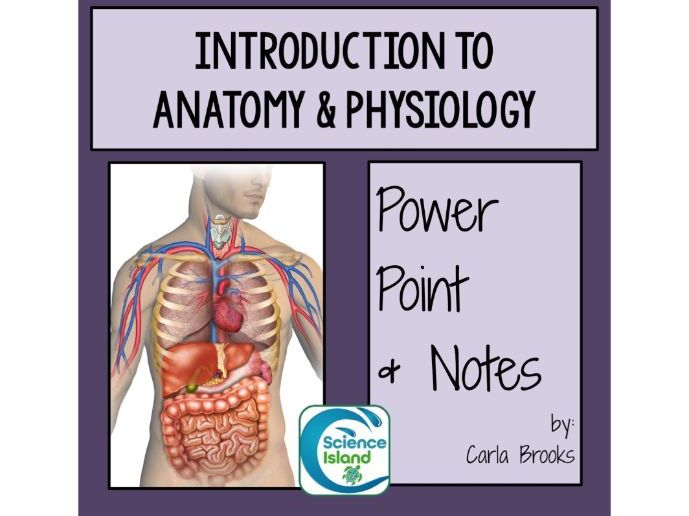 Introduction To Anatomy And Physiology Powerpoint And Notes By