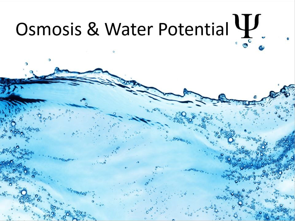 Osmosis and Water Potential