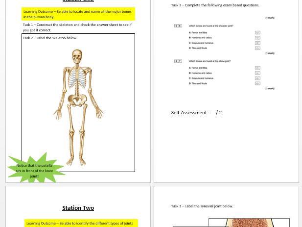 Skeletal System Booklet