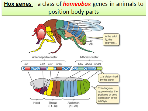 Case Study Biology Teaching Teaching Socio Environmental Synthesis With The  Case Pinterest