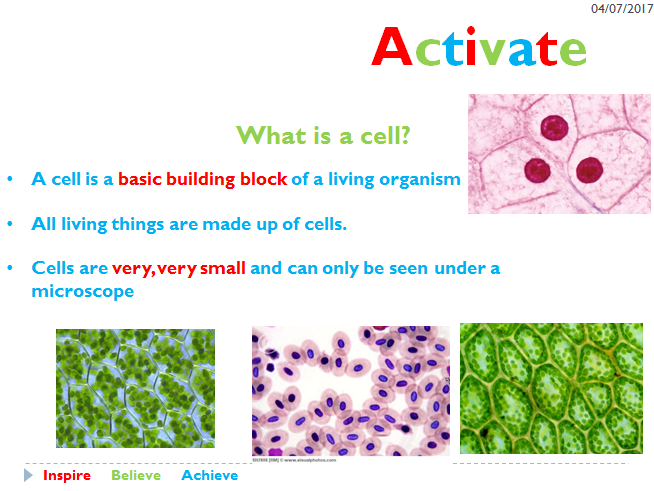 Activate 1 - Animal and Plant cells - Year 7   Teaching ...