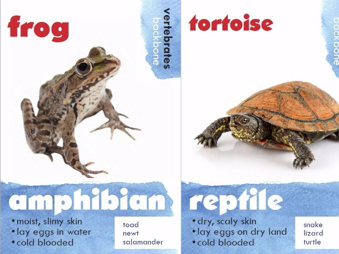 Animal Classification Posters - Vertebrates