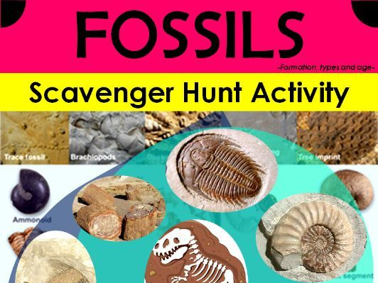 Fossils Scavenger Hunt Activity