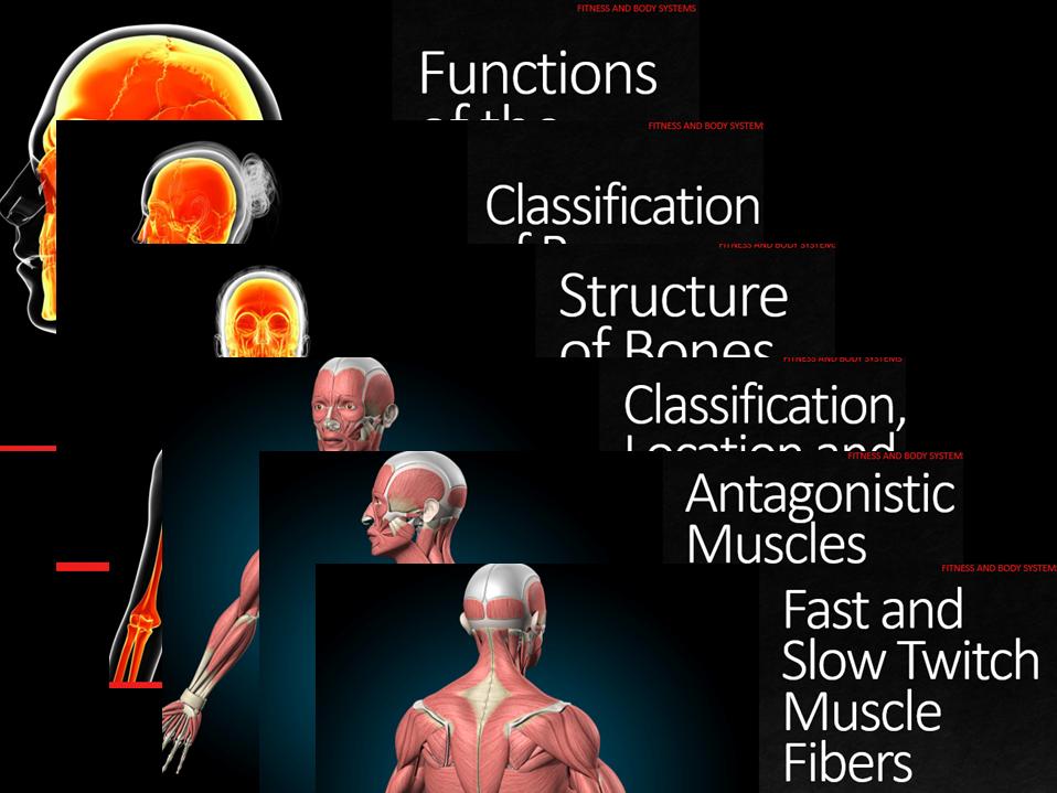 Muscular Skeletal