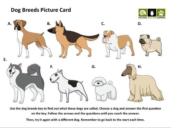 Identification Key Activities and Templates for KS2 (classification, minibeasts, Australian animals)
