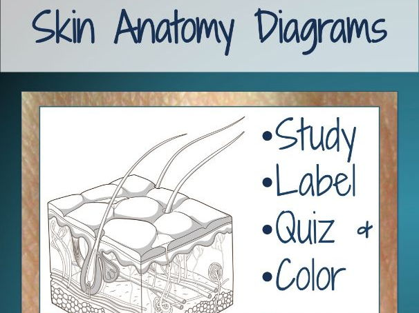 Skin diagrams and quiz by scienceisland teaching resources tes cover image ccuart Choice Image