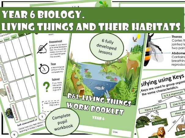 BUNDLE Year 6 Biology: Living Things and Their Habitats