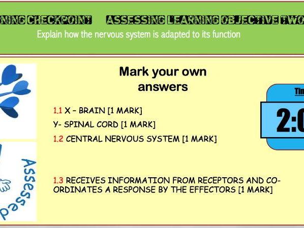 AQA TRILOGY 4.5.2 Human nervous System