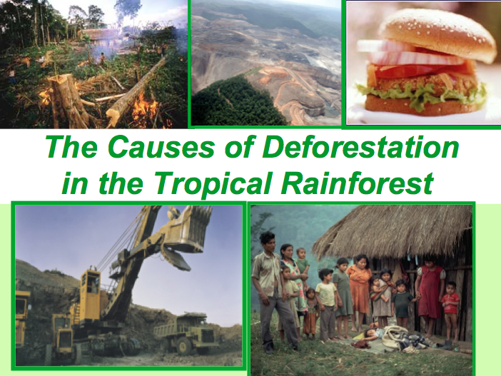 What are the Causes of Deforestation? Tropical Rainforest - Ecosystems