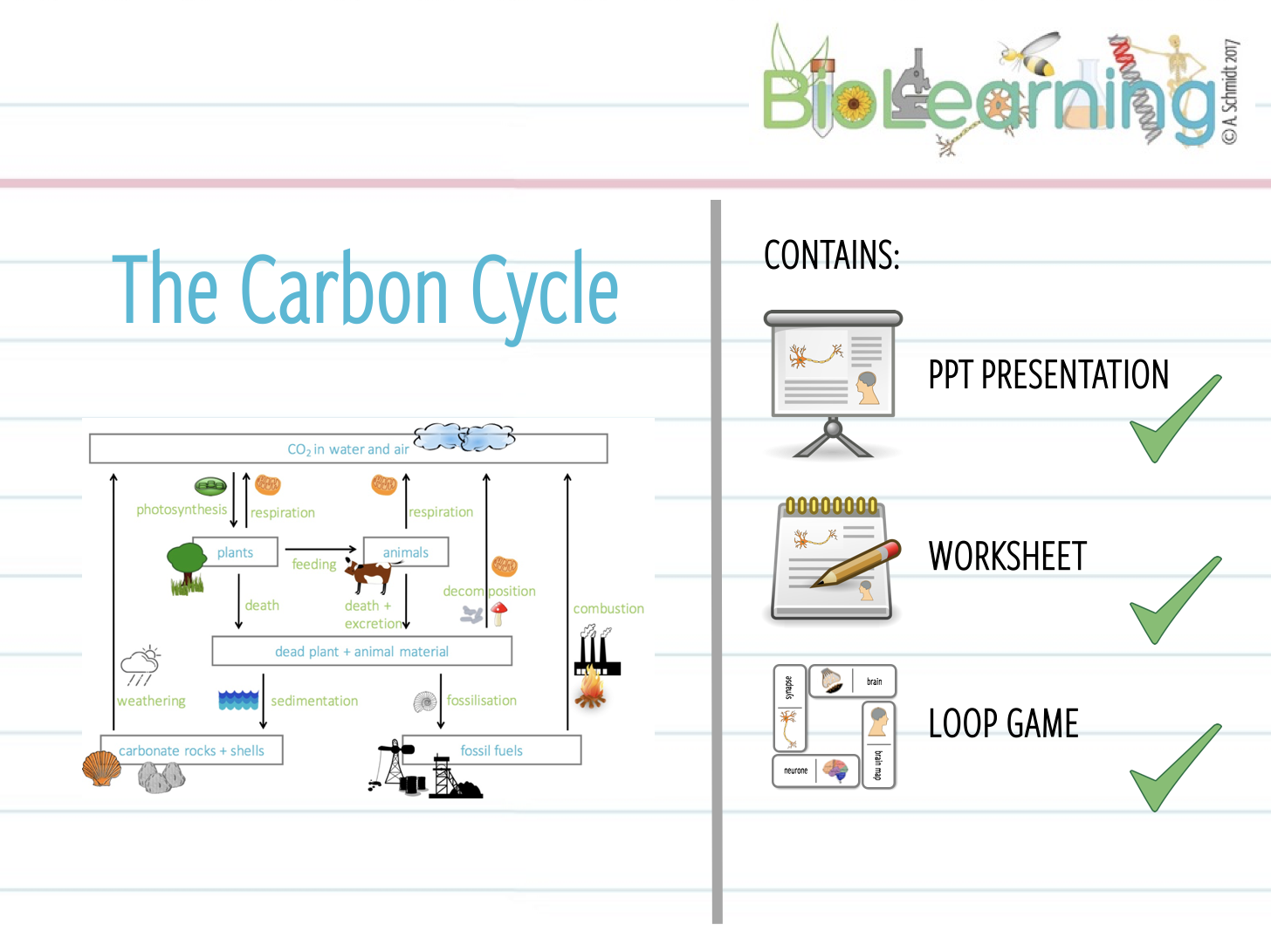 Carbon Cycle Powerpoint PPT Worksheet and Loop Game KS3KS4 – Carbon Cycle Worksheet High School