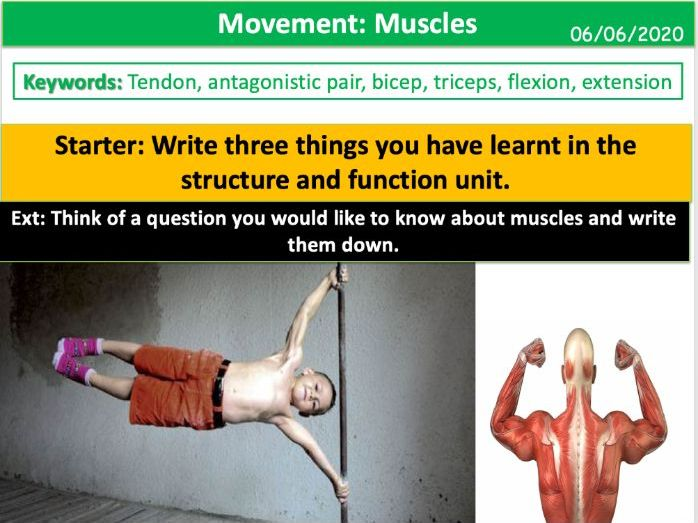 Movement: Muscles