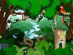 OCR A GCSE Geography 9-1: What processes are at work in tropical rainforests?