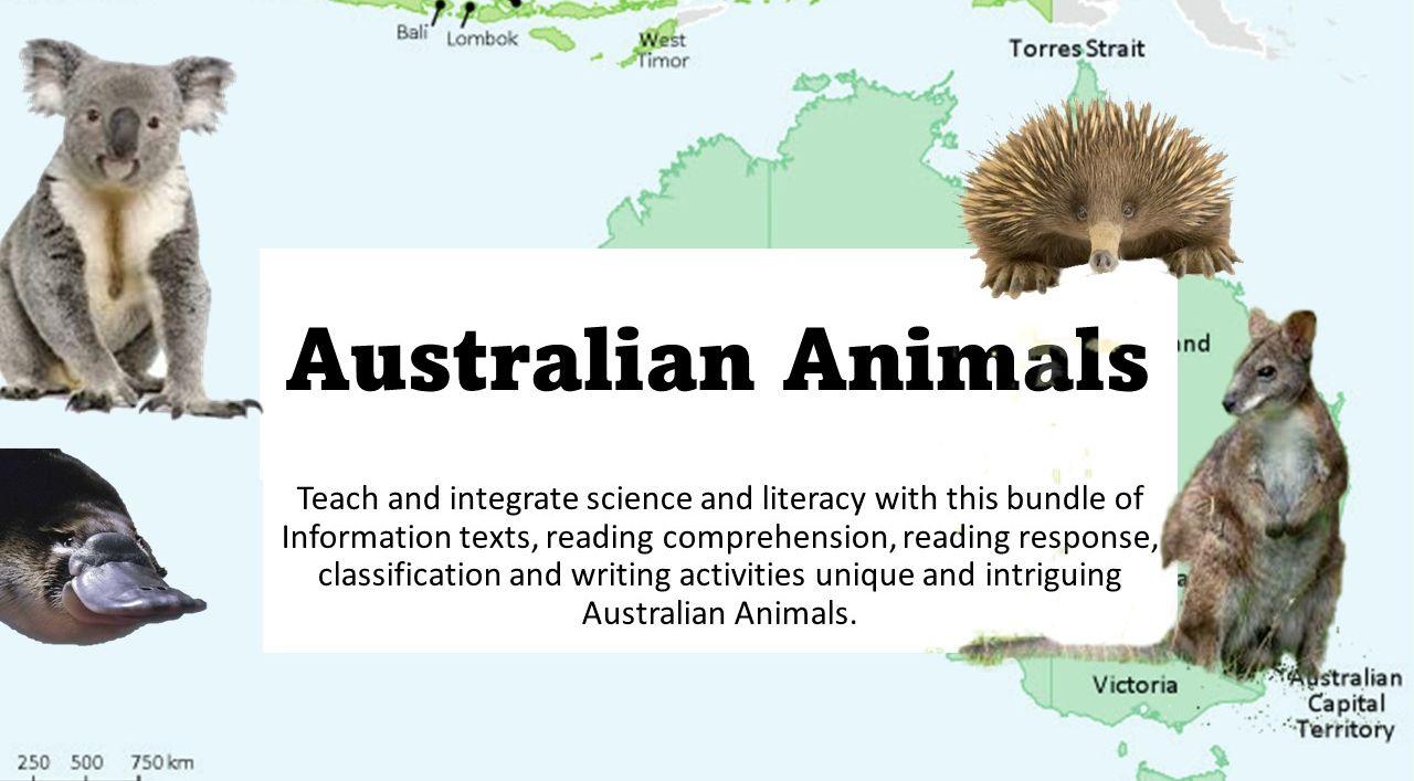 Australian  Animals Information Texts