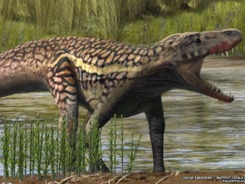 Reading Comprehension - BBC News Article - Mountain Reptile Discovery
