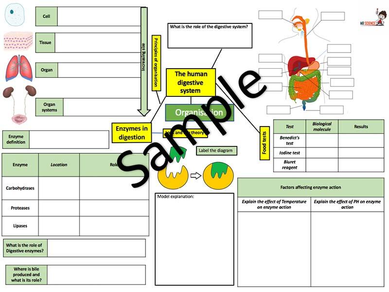 AQA Organisation part 1 revision mat