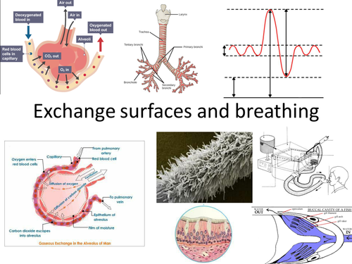 Exchange and transport - New Spec - WHOLE MODULE - OCR A level biology