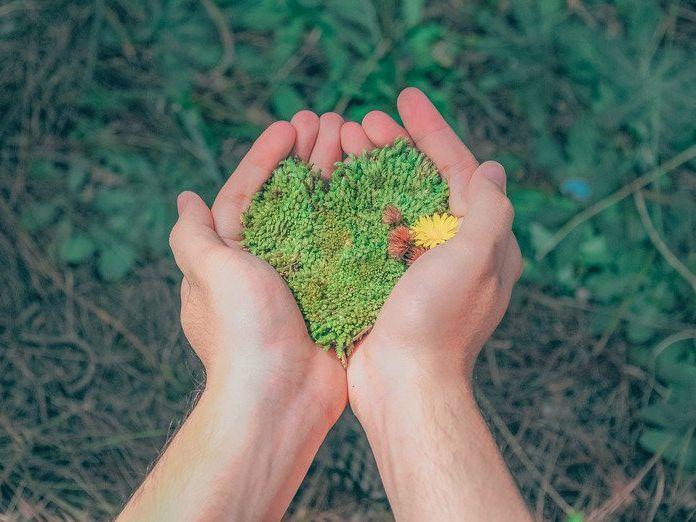 Environnement - KS4 - French