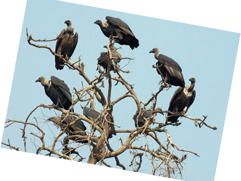 Vultures- Poetry- Culture and Identity