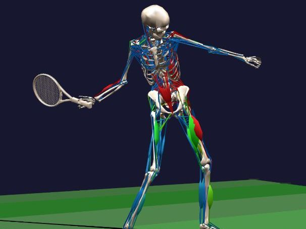 Resources for the cardiovascular and skeletal systems.