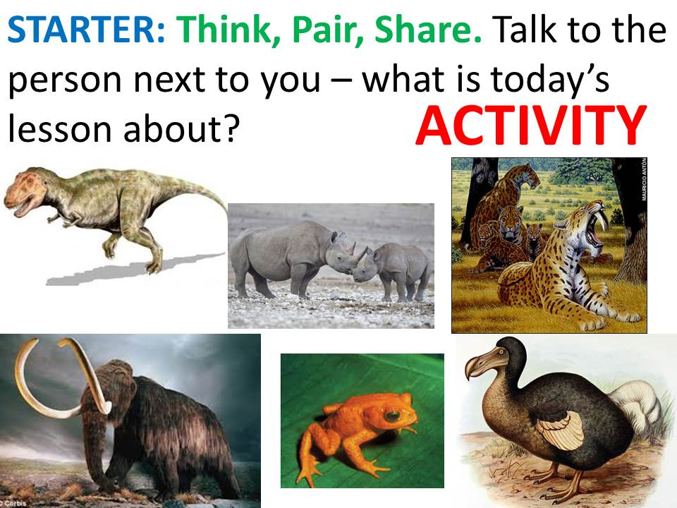 Extinction, preventing extinction, conservation, captive breeding etc. KS3 Biology complete lesson.