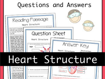 Heart Structure Activity