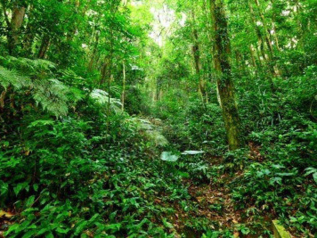 The Importance of Tropical Rainforest Ecosystems